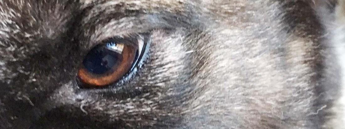occhio maya