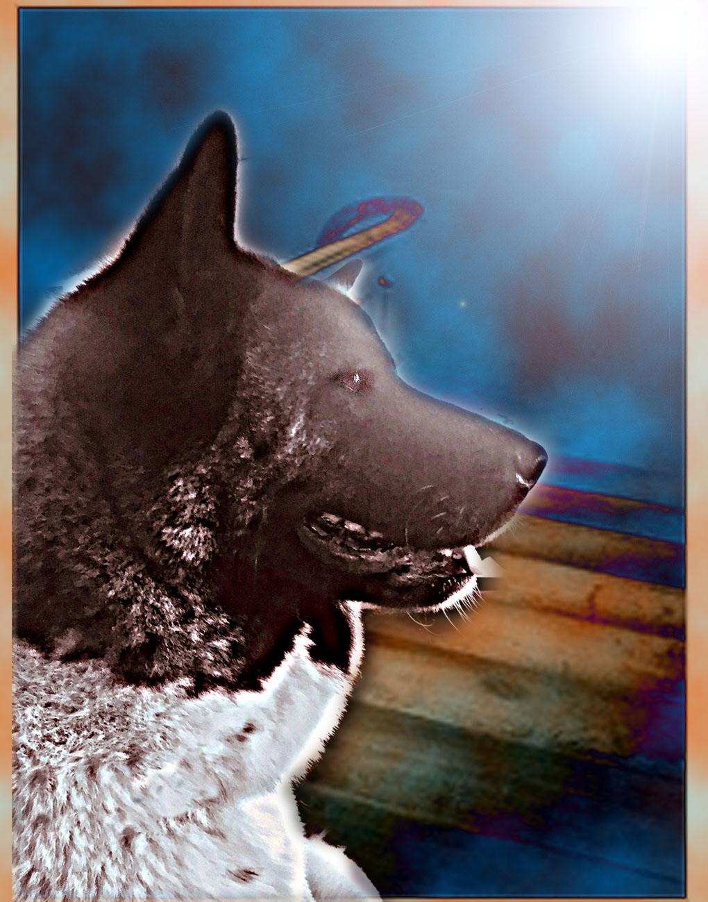 Cane e scala
