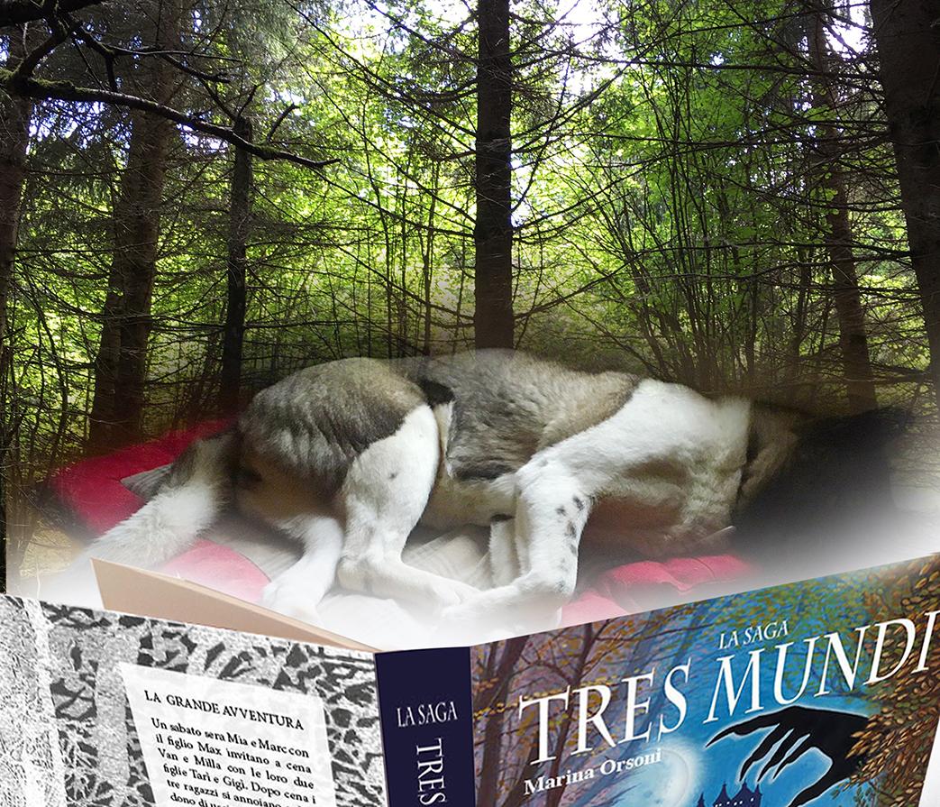 Grande cane dormiente librox wordpress